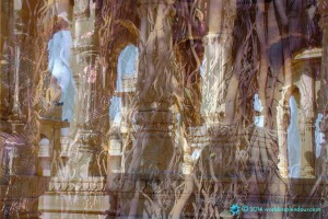 Dreamlike visionary fusion of temple and jungle; big banyan tree layered with Bada Bagh cenotaphs, near Jaisalmer, Rajasthan, India